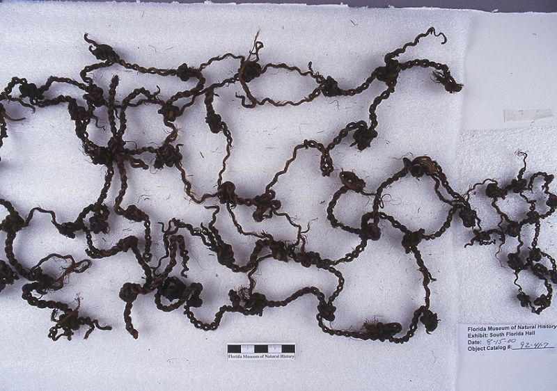 Fishing net fragments, palm fiber, A.D. 700-1500, Key Marco, Collier Co. (92-41-7)