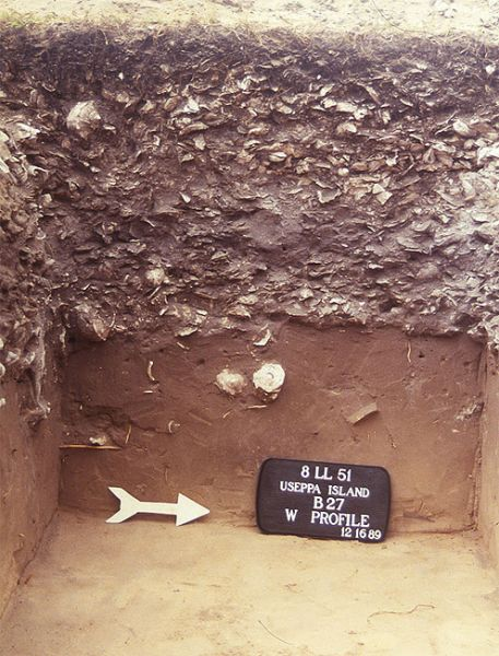 Section of 1989 excavation at Useppa Island shows deposits dating to the Late Archaic period.