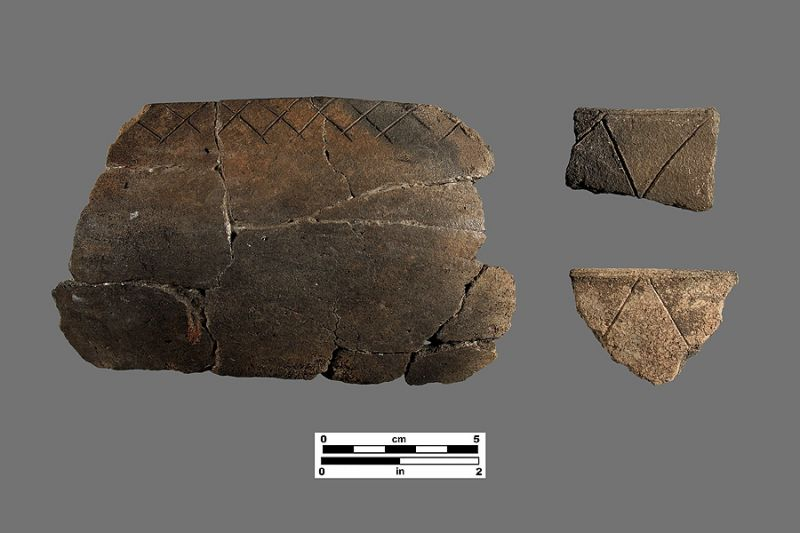 Matecumbe Incised (Glades series). Photo by P. Payne