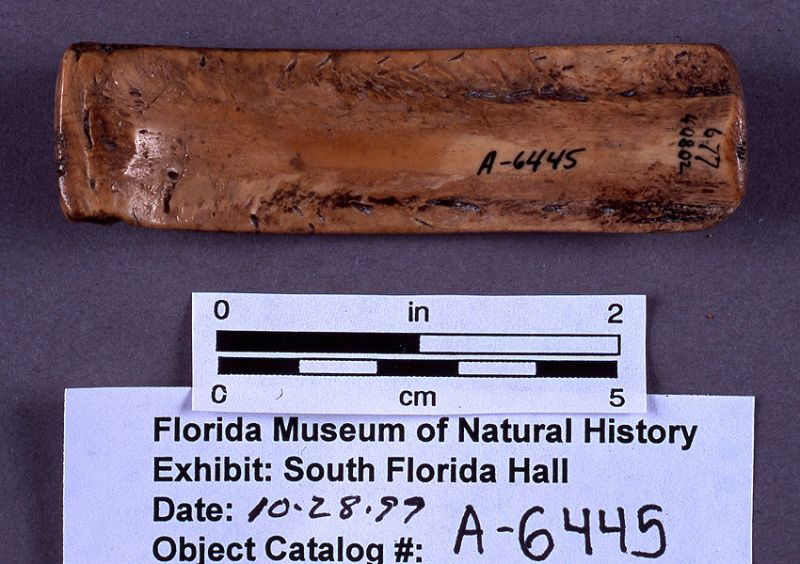 Net mesh gauge, turtle bone, A.D. 700-1500, Key Marco, Collier Co. (A-6445)