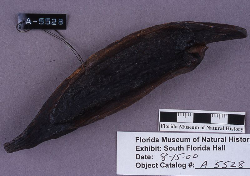 Canoe-shaped vessel or toy canoe, wood, A.D. 700-1500, Key Marco, Collier Co. (A-5528)
