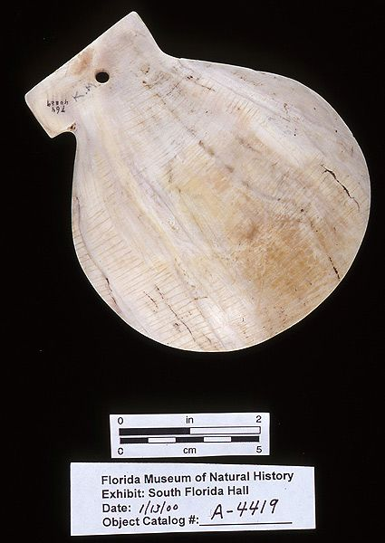 Scallop effigy gorget, whelk shell, A.D. 700-1500, Key Marco, Collier Co. (A-4419)