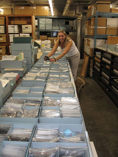 Donna Ruhl works on re-housing Pineland archaeobotanical specimens and samples in the new collections curation system.
