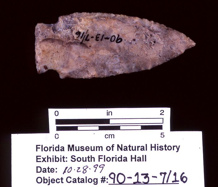 Knife or projectile point, chert, A.D. 500-650, Pineland, Lee Co. (90-13-7/16)