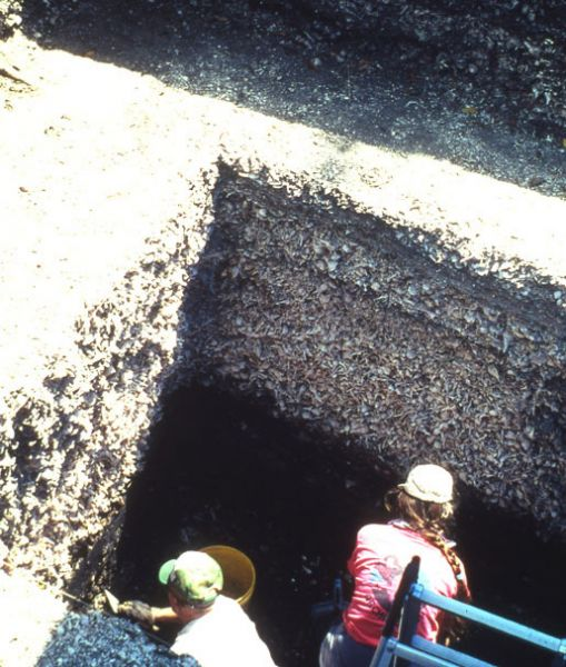 Excavations in unit C-5, Pineland, May 1990.