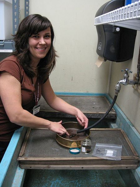 Melissa Ayvaz washes waterlogged wood specimen prior to curation.