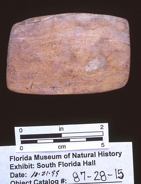Net mesh gauge, whelk shell, A.D. 900-1100, Josslyn Island, Lee Co. (87-28-15)