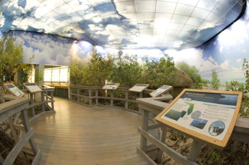 Mangrove Boardwalk in South Florida exhibit