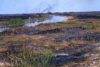 Scorched habitat. Photo courtesy South Florida Water Management District