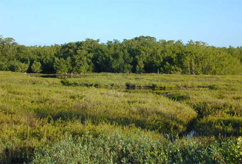 Coastal prairie. Photo courtesy U.S Geological Survey