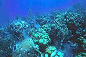 Bank reef scene. Photo courtesy U.S. Geological Survey