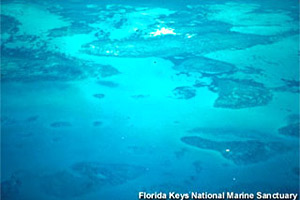 Florida reef tract. Photo courtesy Florida Keys National Marine Sanctuary