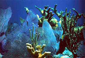 Corals tolerate a narrow range of salinity. Photo courtesy National Park Service