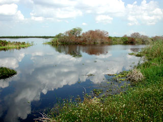 Marsh within the Loxahatchee Wildlife Refuge. Florida Museum photo by Cathleen Bester