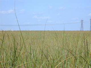 Everglades Sawgrass. Photo courtesy U.S. Geological Survey