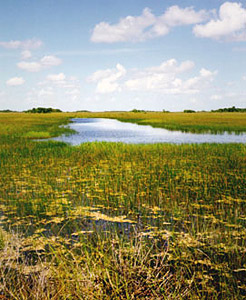 Everglades. Photo courtesy U.S. Geological Survey
