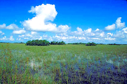 Florida Everglades. Photo courtesy South Florida Water Management District