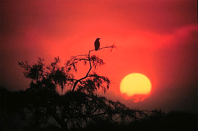 Everglades sunrise. Photo courtesy NOAA