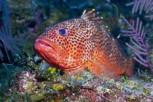 Reef fish attract tourists to the Florida Keys. Photo © Chuck Savall