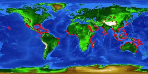 World distribution map of mangroves