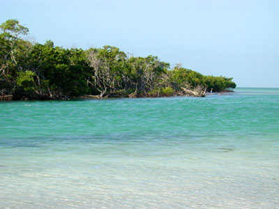 Mangrove Island in the Florida Keys © Cathleen Bester / Florida Museum