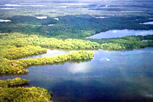 Florida Bay mangroves. Photo courtesy South Florida Water Management District