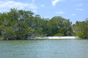 Gulf Shoreline: Ten Thousand Islands. Photo courtesy U.S. Geological Survey