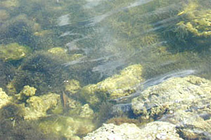 Algae. Photo courtesy U.S. Geological Survey