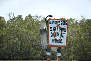 Manatee zone. Photo courtesy U.S. Geological Survey