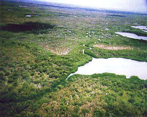 Aerial view of lower Taylor Slough near Florida Bay with mangroves and tidal creeks. Photo courtesy U.S. Geological Survey