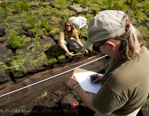 Drought and Dugout Canoe research is revealing new insights not only about the canoes, but, also, sediments, hydrology, fauna and flora impacts.