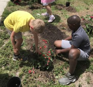 two boys plant a plant with red flowers
