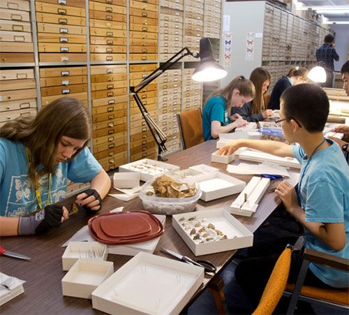 Several high school student sitting at a long table with trays of pinned butterflies