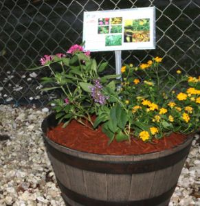 a sign in a pot of plants b explains what butterflies are attracted to the flowers