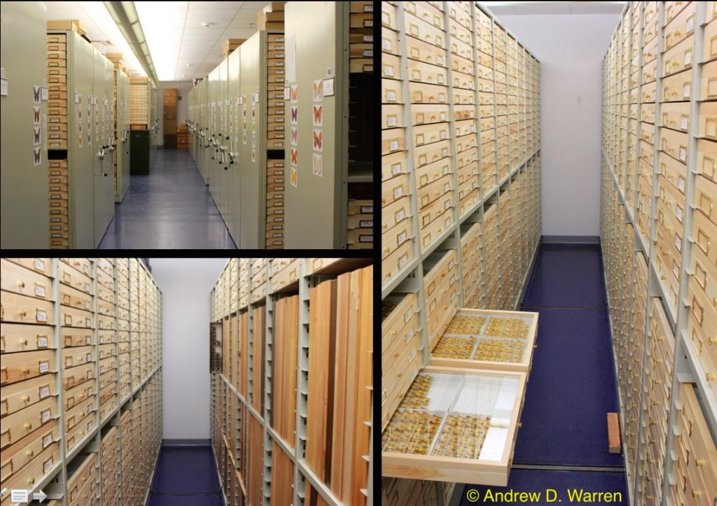 rows of specimen drawers and cabinets