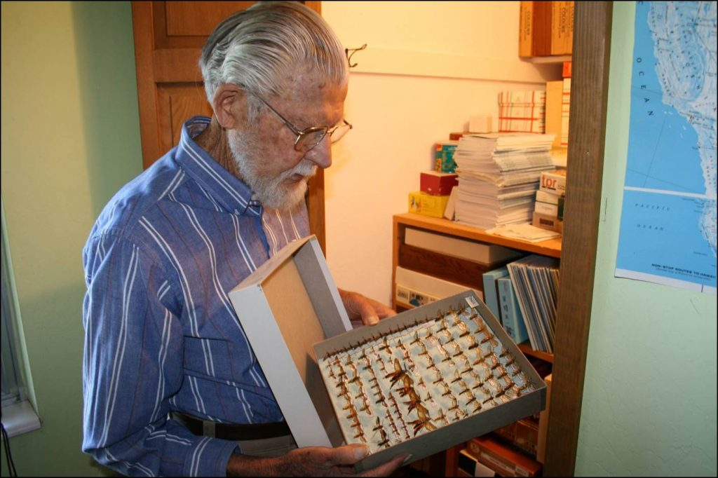 older man looking at insect collection box
