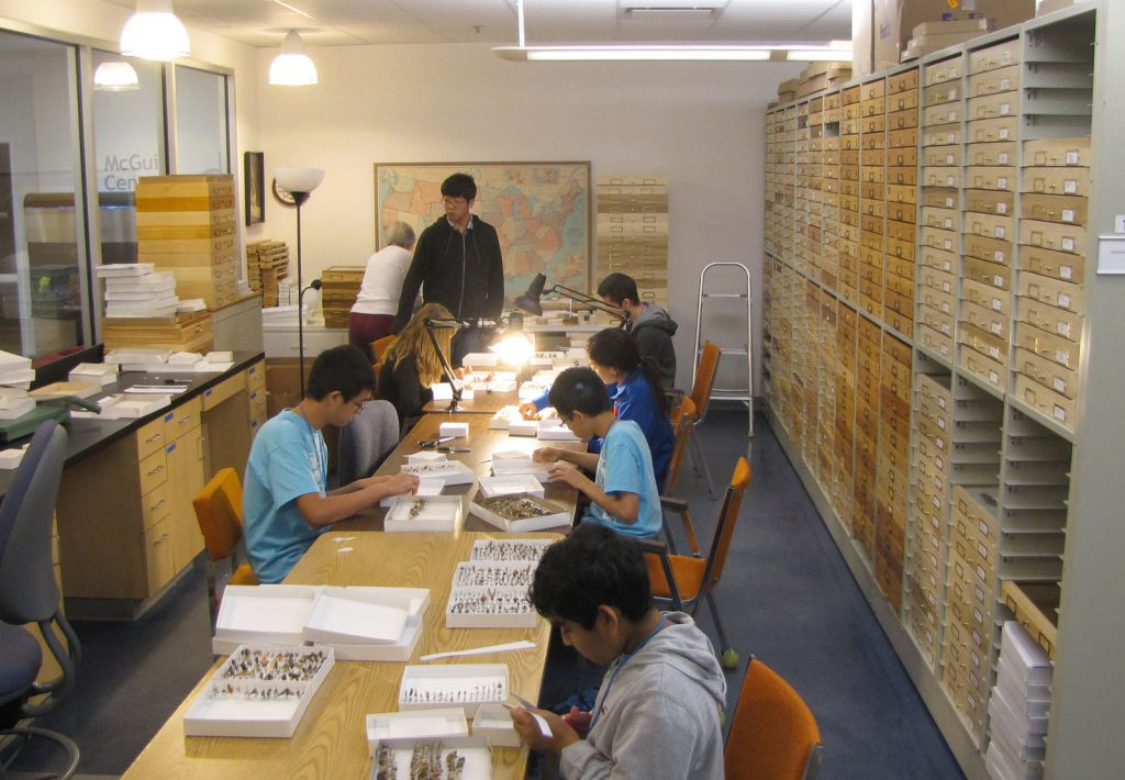 seven students at long table processing specimens