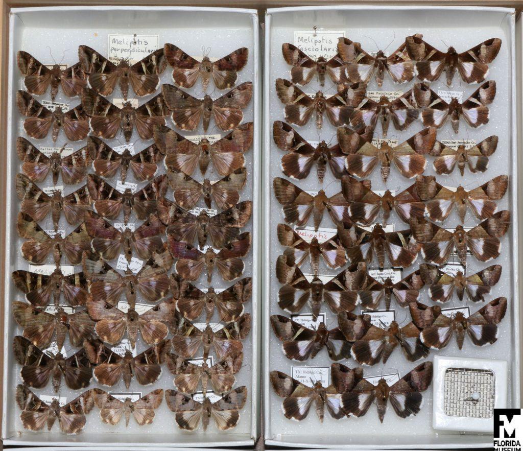 butterfly specimens