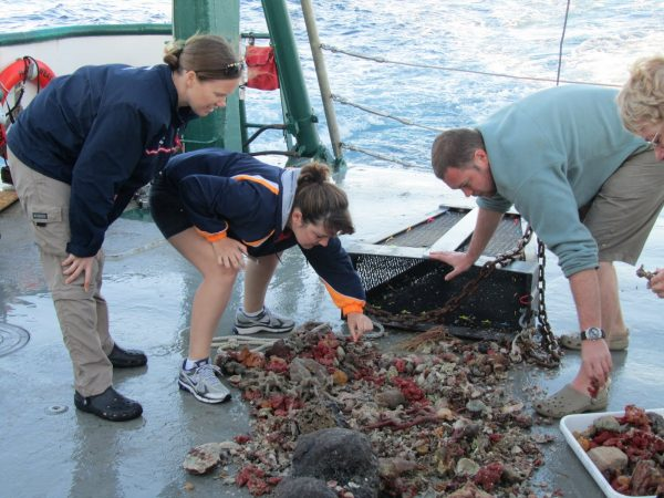 Anna, Brendan, and Nicole looking over a pile of sponges on the boat deck