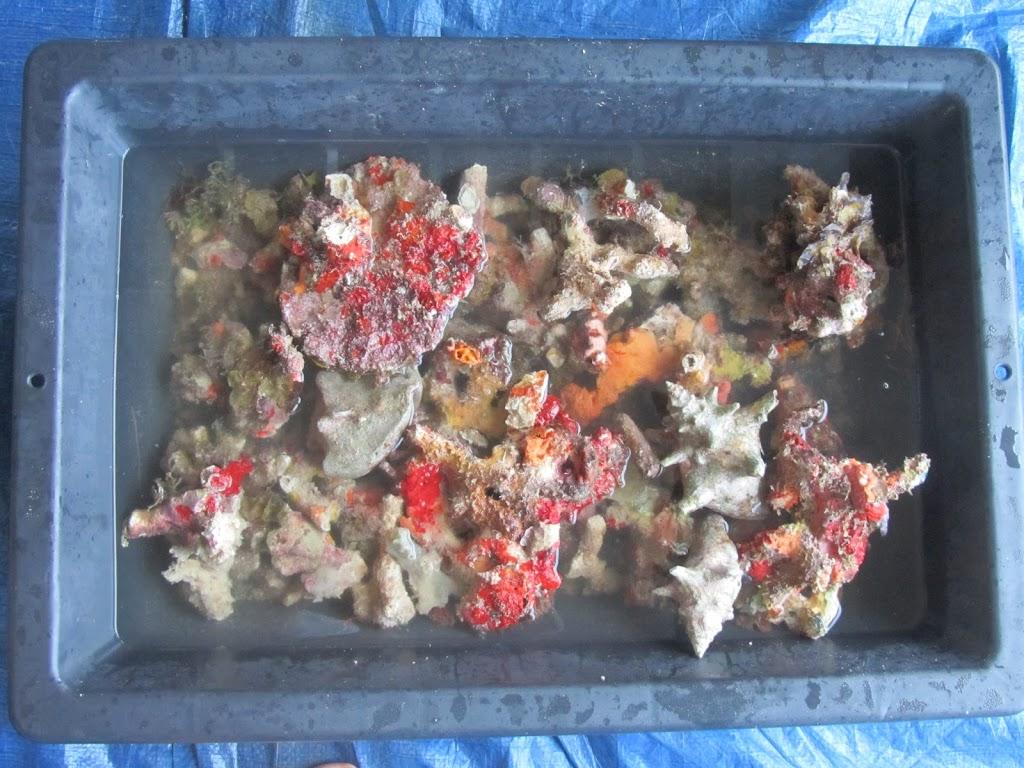 rubble in tray