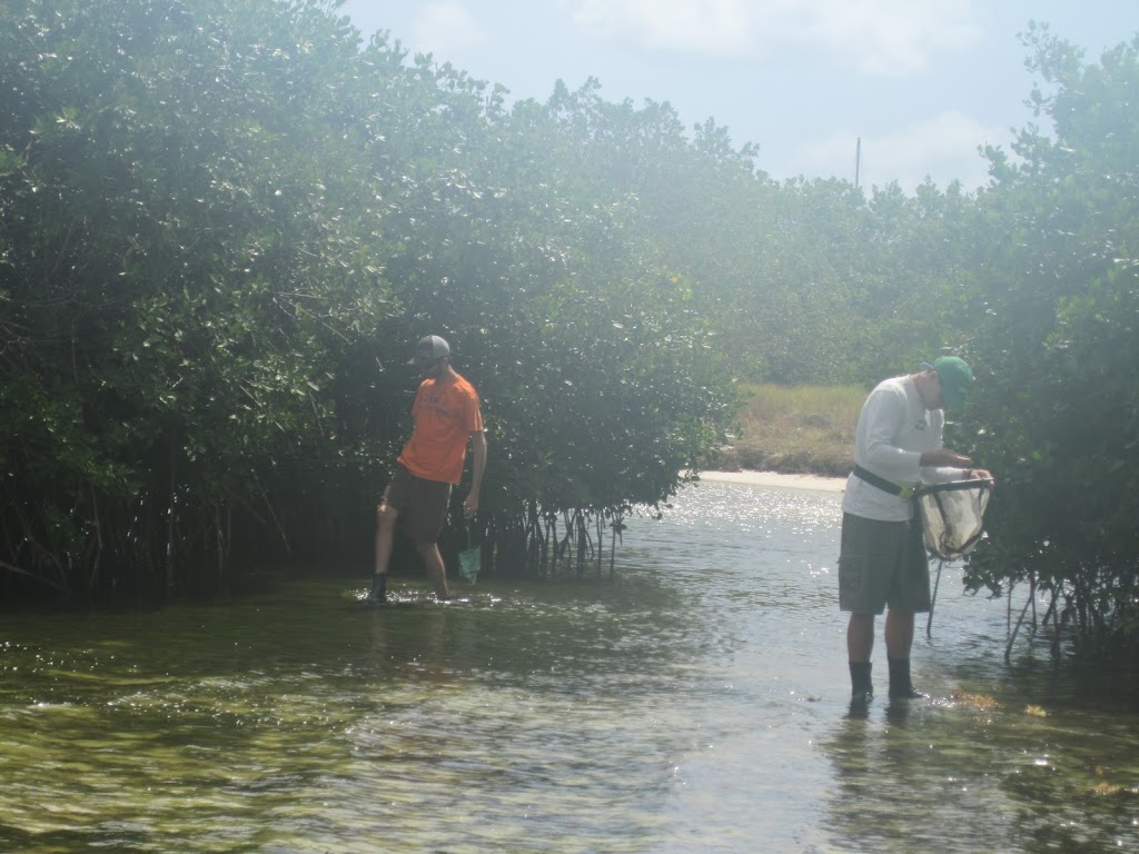 scientists hunting crabs