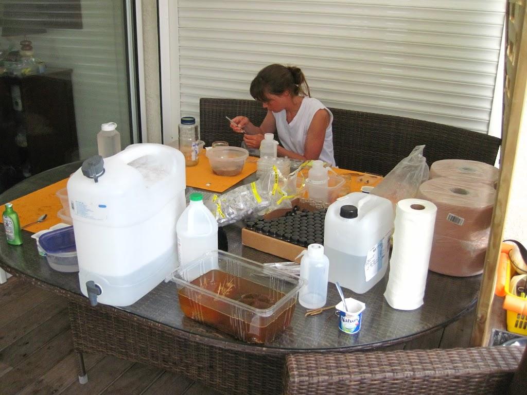 Mandy processing specimens
