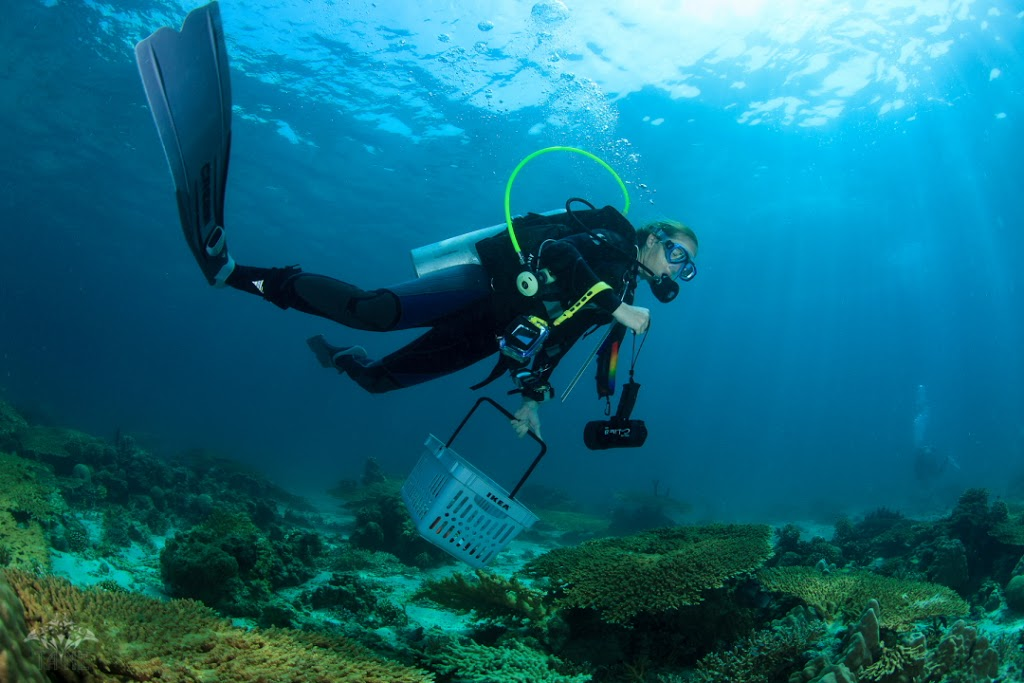 KAUST doctoral candidate Jessica Bouwmeester shops the reef for new species of coral. Photo courtesy Tane Sinclair-Taylor.