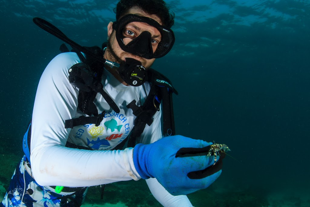Cruise organizer Dr. Michael Berumen of the KAUST Reef Ecology Lab shows off a prize pistol shrimp.