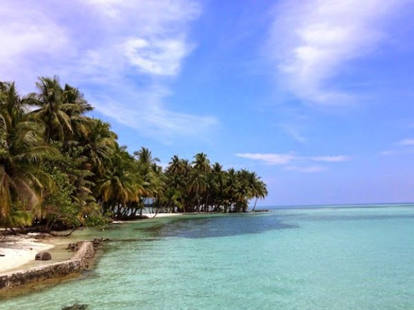 shoreline with palm trees