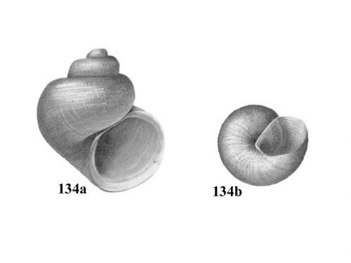 Figs. 134a & 134b