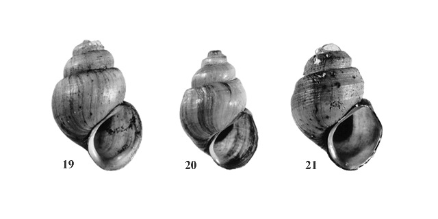 Figs. 19, 20 & 21