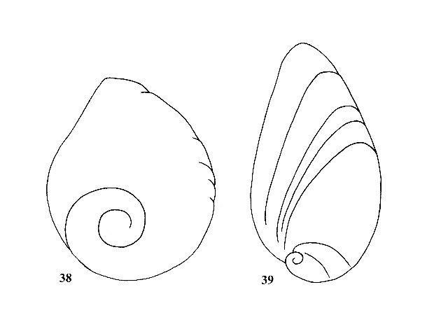 Figs. 38 & 39