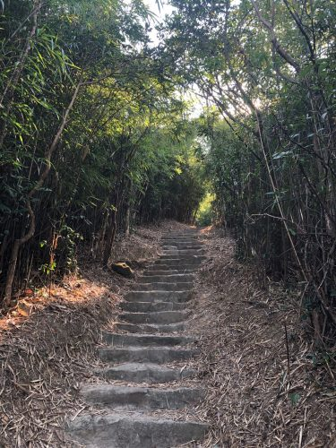 view up stone stairs between towering bamboo