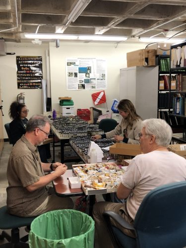 group of people processing specimens